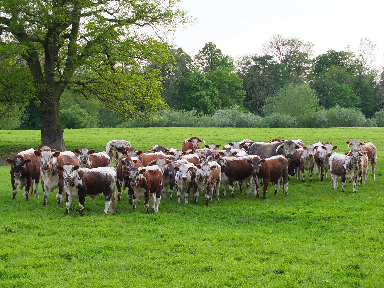 Herd on the Marsh